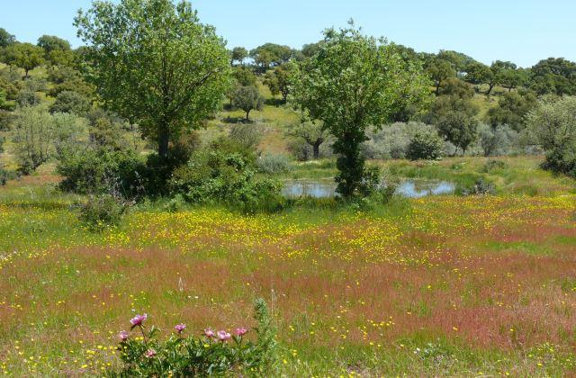 Estanque temporal mediterráneo en la Reserva_JA Herna