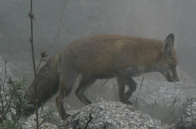 Fauna El Torcal 2