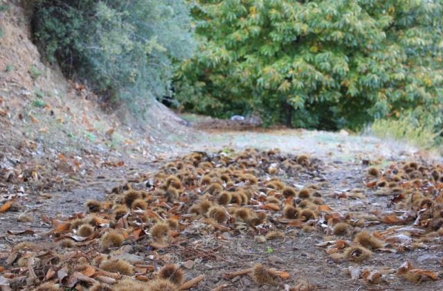 otoño, castañas
