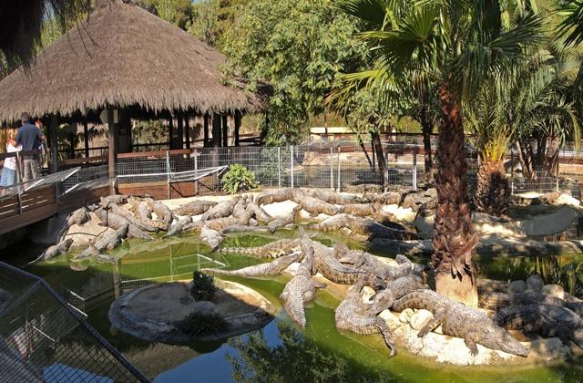 Parques temáticos - Torremolinos_-_Crocodile_Park