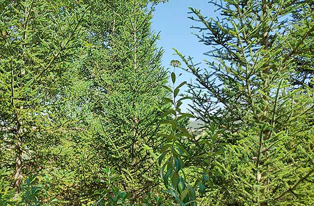 bosques de Pinsapos Grazalema