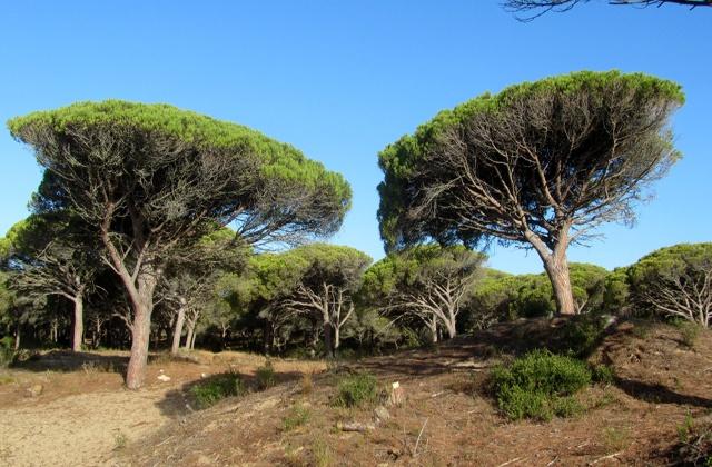 Parques Naturales de Andalucía - parque natural de la breña