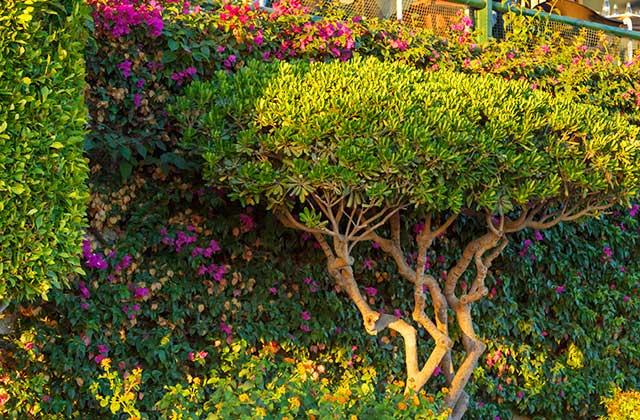 Patios de Andalucia - Rota, Cádiz Editorial credit: Shootdiem / Shutterstock.com