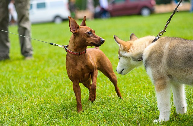 parque perros