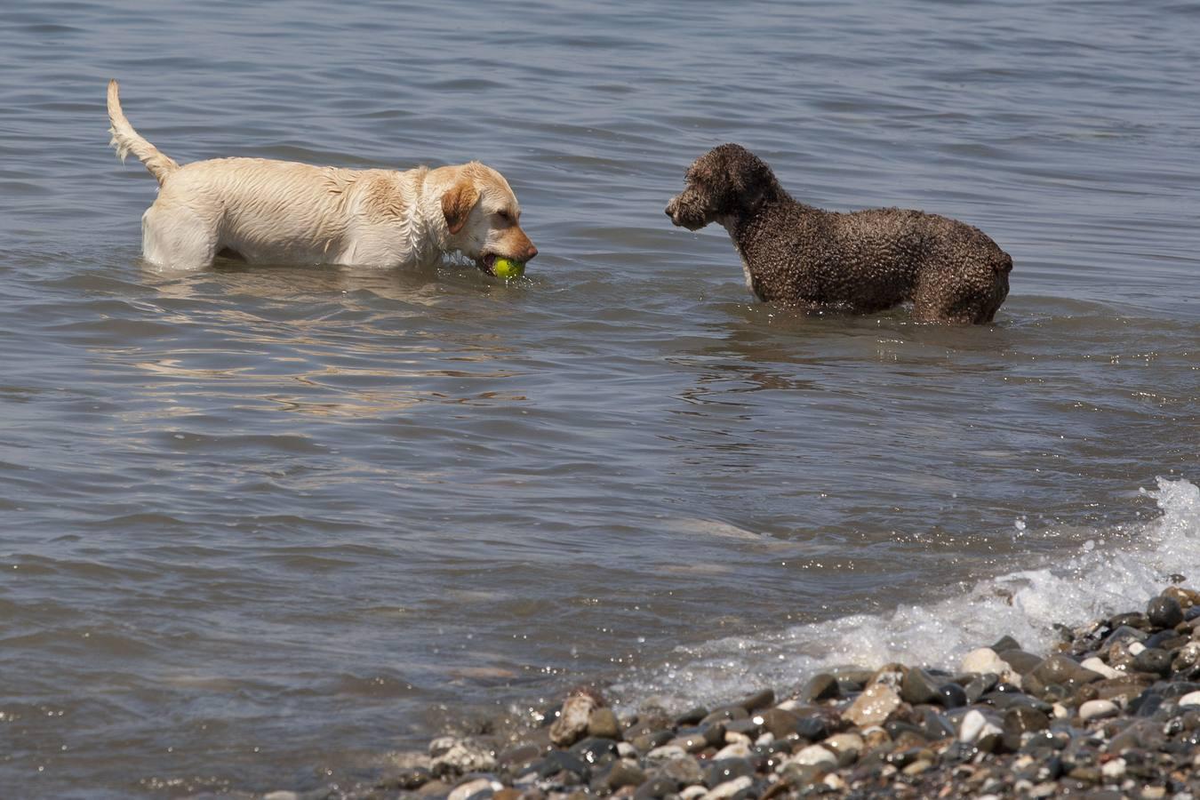 Playa de perros de Málaga