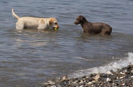 Playa perros Málaga