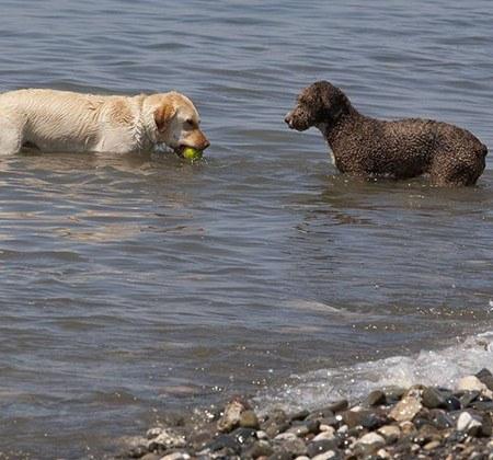 Playas para perros en Málaga
