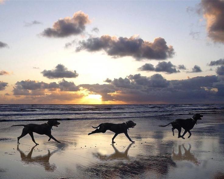 Playas para perros en Málaga - Playa Sal Casares