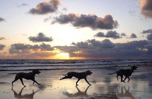 Strände für Hunde in Málaga - playa sal mascoteros