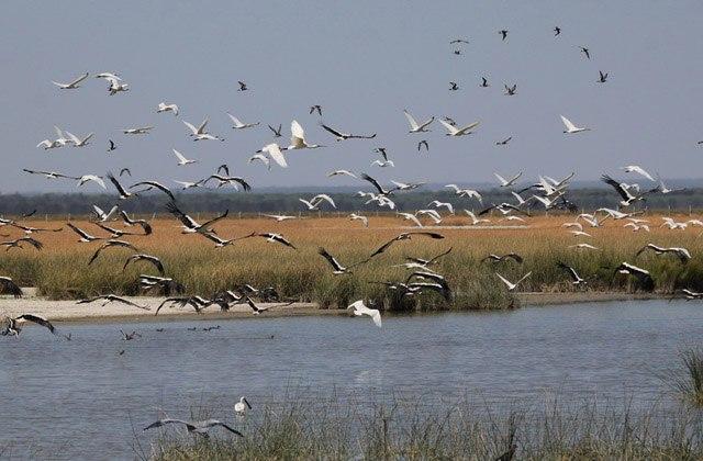 Parque Natural de Doñana. Fotografía: www.iberia-natur.com