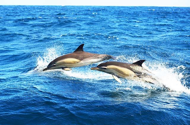 Delfines Marbella