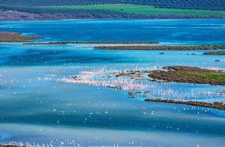 Flamencos Laguna de Fuente de Piedra
