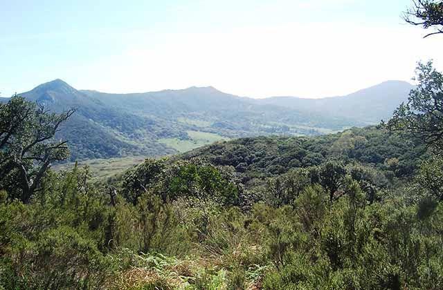 Bosques en Andalucía - Bosque de pino de El Juanar, Ojén . Fotografía: dcaminata.wordpress.com