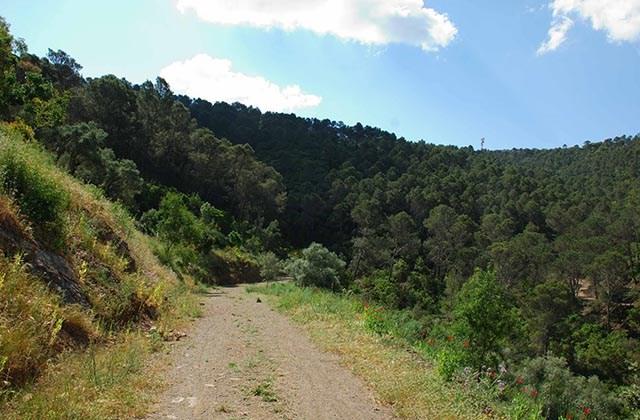 Bosques en Andalucía - Bosque de pino de los Montes de Málaga