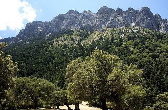 Bosques en Andalucía - Bosque de pinsapos en Grazalema. Fotografía: aventura-humana.blogspot.com
