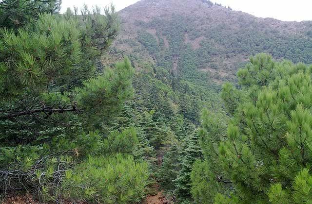 Bosques en Andalucía - Bosque de Los Reales, Sierra Bermeja