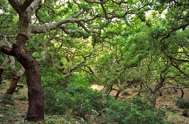 Bosques en Andalucía - Bosque de Los Alcornocales, Tarifa. Forografía: blog.andaluciaparadise.com