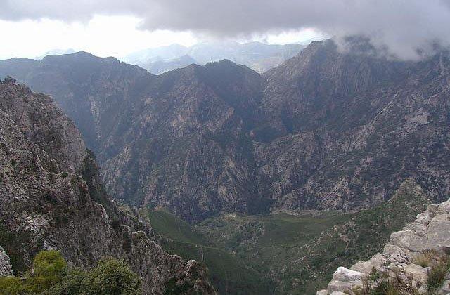 Bosques en Andalucía - Sierra de Tejeda, Almijara y Alhama. Fotografía: empresarios.ruralia.com
