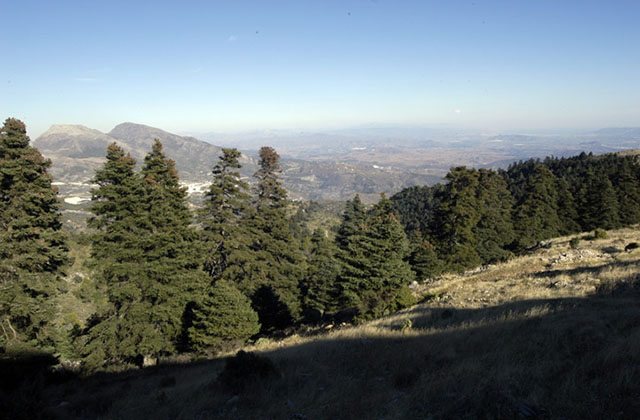 Pilztourismus: 9 Orte in Andalusien zum Pilzesammeln: Bois de pinsapos, Sierra de las Nieves. Photographie: ruralidays.wordpress.com