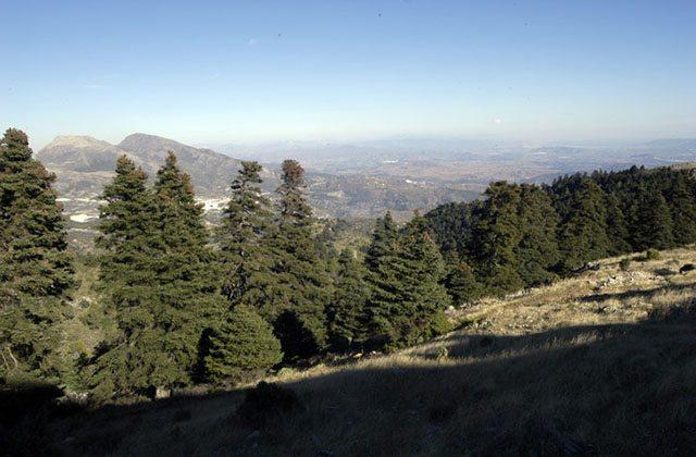 Bois de pinsapos, Sierra de las Nieves. Photographie: ruralidays.wordpress.com