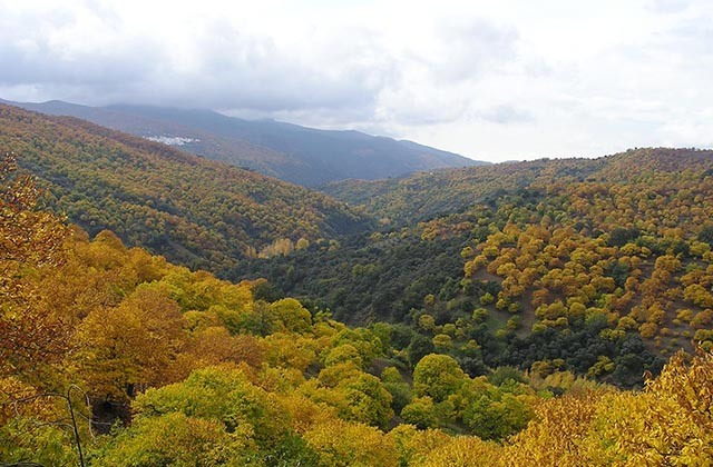 Bosques en Andalucía - Valle del Genal. Fotografía: blogsostenible.wordpress.com