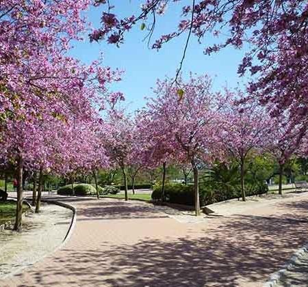 Parque de la Paloma, Fuengirola. Fotografía: deviajeporespana.com