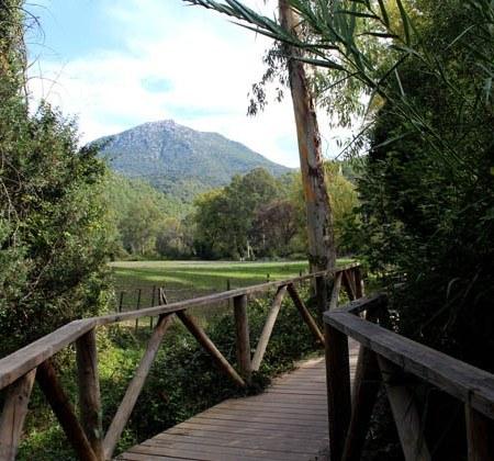 Puente de Madera río majaceite.