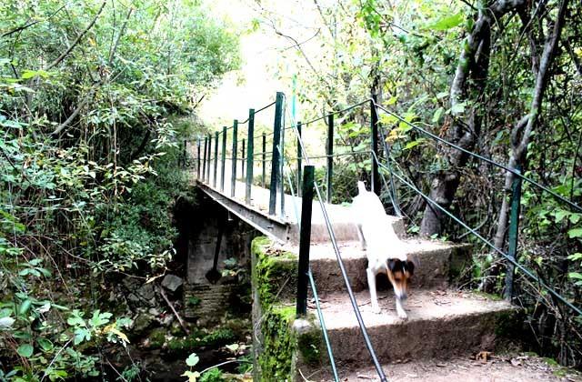 Puente del Majaceite