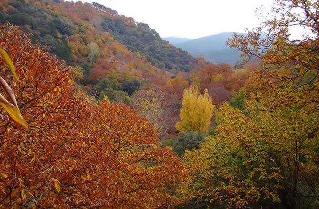 Bosques en Andalucia