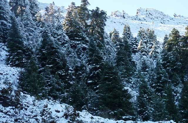 10 places to enjoy the snow in Andalucia - Grazalema Forest path