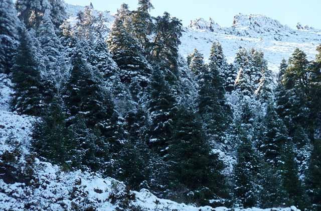 10 Routen, um den Schnee in Andalusien zu genießen - Nadelwald von Grazalema