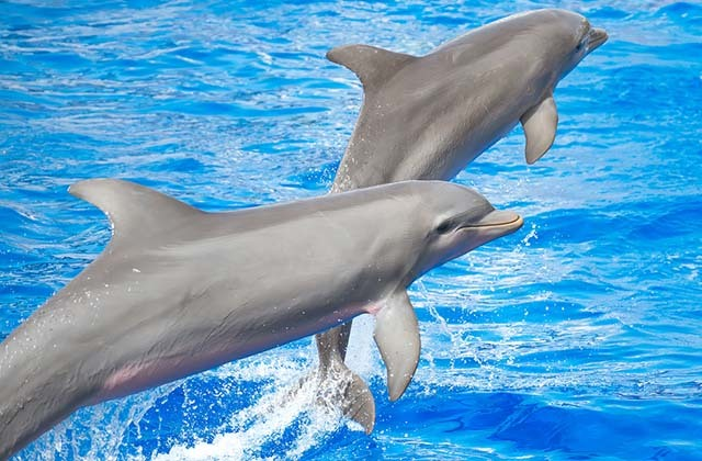 Valentine's Day in Andalucia - Bathing with dolphins and whale watching