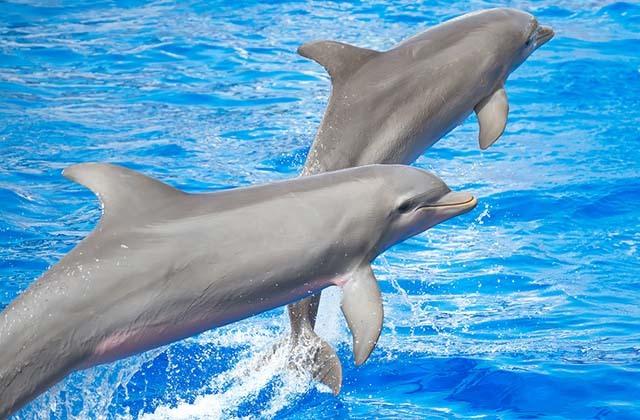 planes originales para celebrar San Valentín - baño con delfines