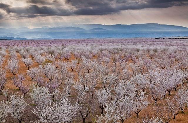 10 Orte in Andalusien, wo immer Frühling sein sollte: besuchen Sie sie: Ruta de los almendros. Fotografía malagatraveler.es