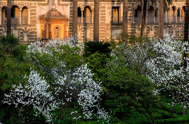 10 places in Andalucia where it should always be spring: visit them: El Alcázar de Sevilla en primavera. Fotografía: alcazarsevilla.org