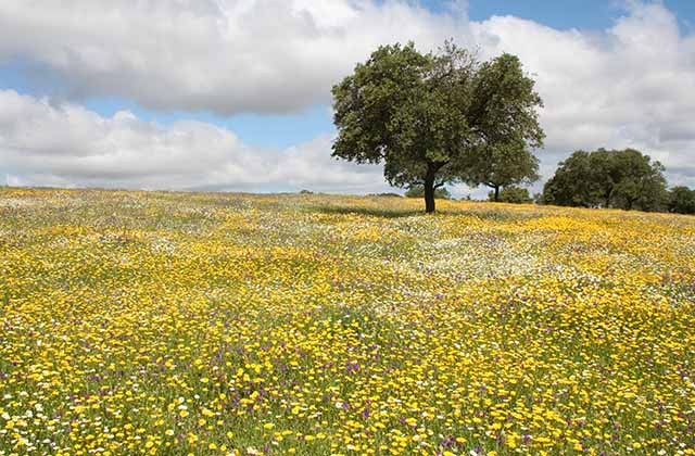 10 places in Andalucia where it should always be spring: visit them: Campo de flores en la Sierra de Aracena y Picos de Aroche. Fotografía: juntadeandalucia.es