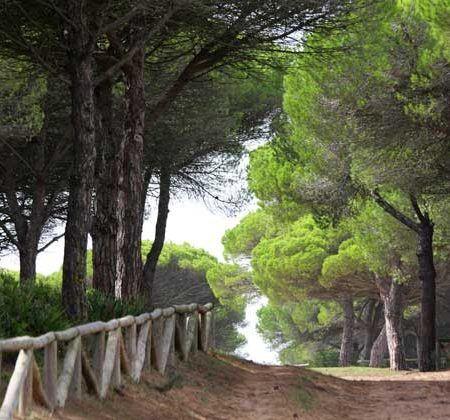 parque natural la breña cadiz