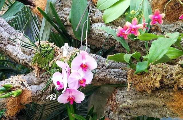Orchideengarten Estepona