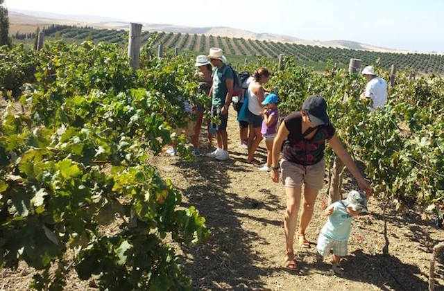 Things to do in Conil de la Frontera - Winery and organic mil Sancha Pérez