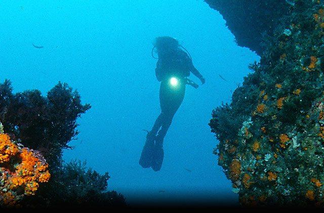 The best places to scuba dive, dive or snorkelling in Andalucia: Conil Fotografía de http-::oceanoadictos.com: