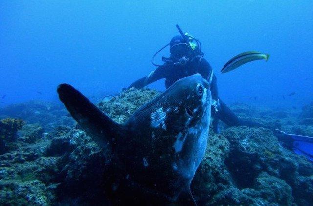 The best places to scuba dive, dive or snorkelling in Andalucia: La Herradura. Fotografía de http-::www.tripanddive.com: