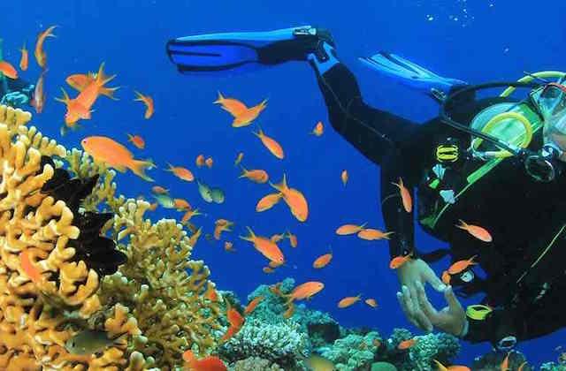 Alternative Easter holiday plans - scuba diving Torrox. Fotografia de http-::www.deportesdeaventura.com: