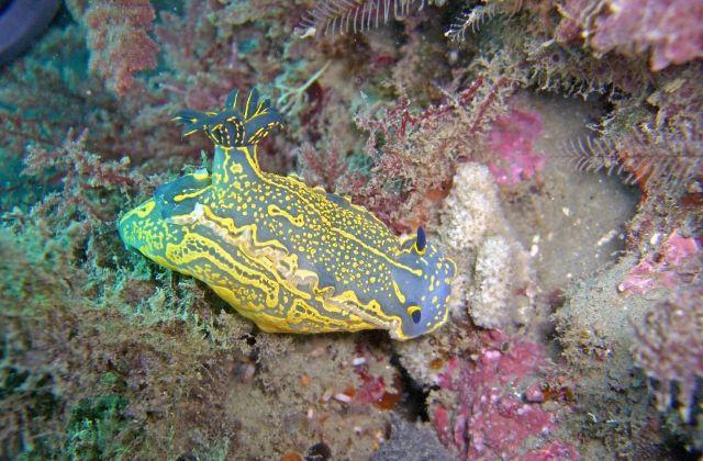 submarinismo, bucear, snorkel en Andalucía - Buceo en Maro. Fotografía de objetivomalaga.diariosur.es