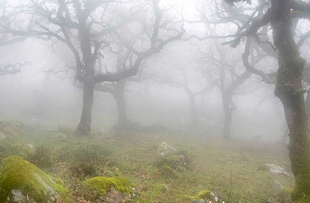 Enjoy the last tropical forest in Europe: Los Alcornocales Natural Park: Bosque de niebla en el Parque Natural de los Alcornocales