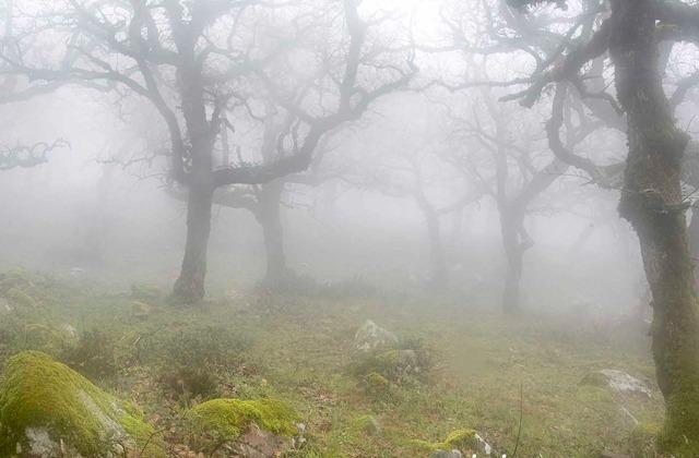 Bosque de niebla en el Parque Natural de los Alcornocales