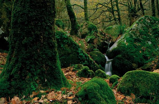 Pilztourismus: 9 Orte in Andalusien zum Pilzesammeln: Parque Natural de los Alcornocales