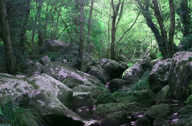 Las maravillas naturales de Andalucía - Parque Naturalde los Alcornocales