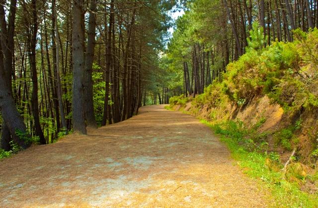 Découvrez Marbella et ses alentours à vélo avec ces sept pistes cyclables: Subida al Juanar