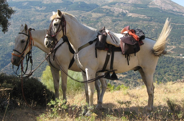 Things to do and see in Sierra de Grazalema - Ruta a caballo