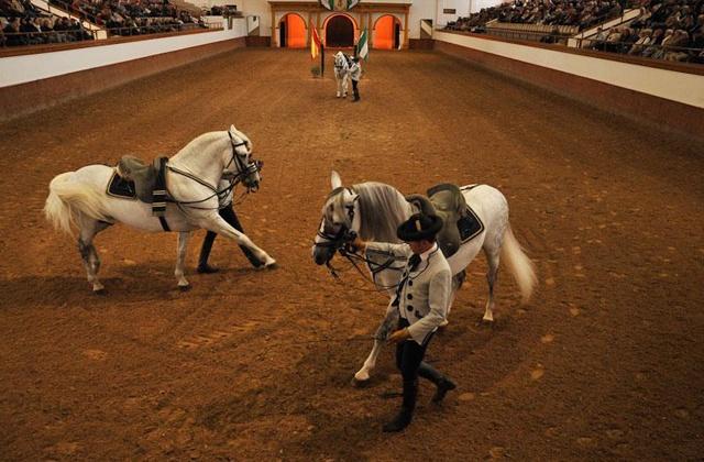 """""""Cómo Bailan los Caballos Andaluces"""" Fotografía de la Fundación Real Escuela Andaluza del Arte Ecuestre"""